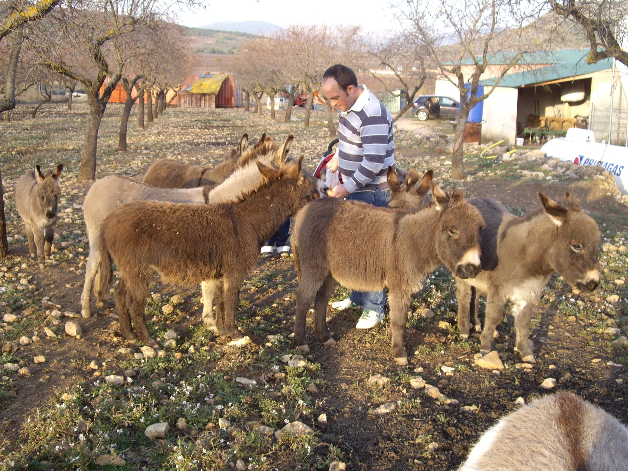 varios burros