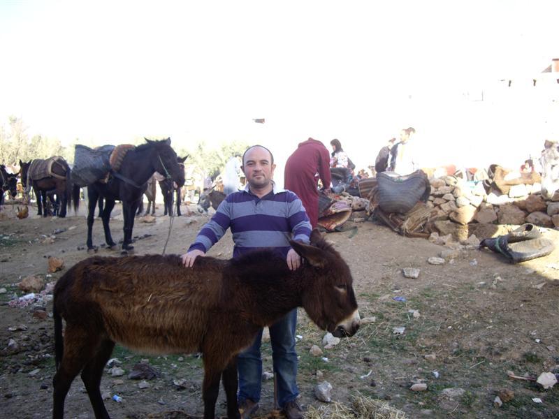 burros y yo
