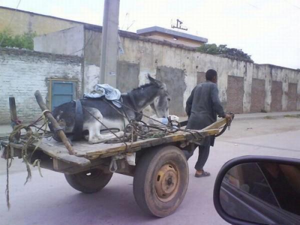 burro en carro