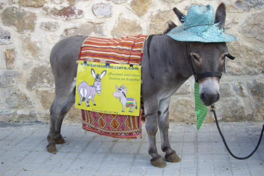 NO SON PELUCHES SON UNA ESPECIE DE MINIBURRO ADORABLES