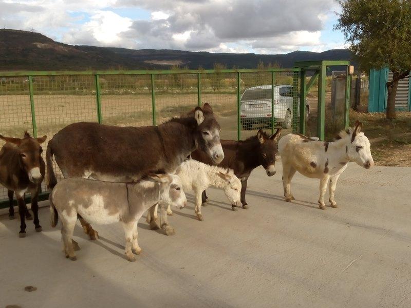 Grupo burros