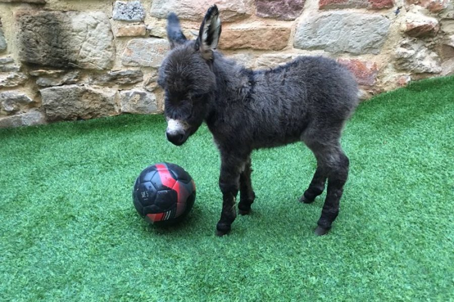 A éste le gusta el futbol!!