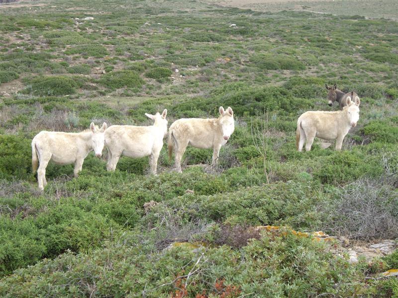 Estudios alertan sobre la desaparición de miles de burros EN CINCO AÑOS!!