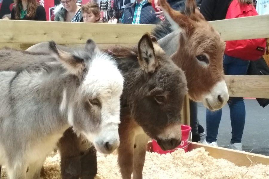 EXITO! EN LA MADRID HORSE WEEK